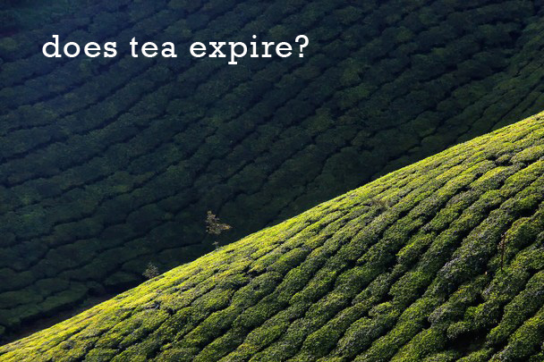 Does Tea Expire?