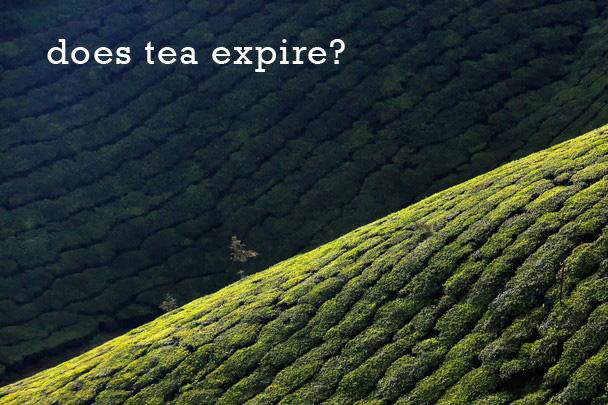 Does Tea Expire?