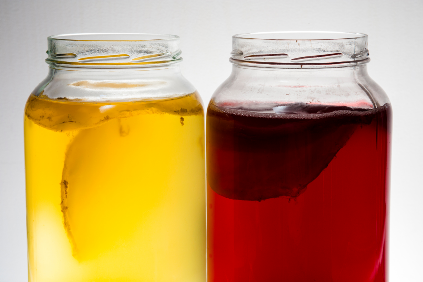 Best Teas to Use for Your Homemade Kombucha